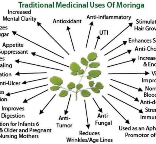 100% Organic Moringa Powder Auto Ship (Includes Shipping)